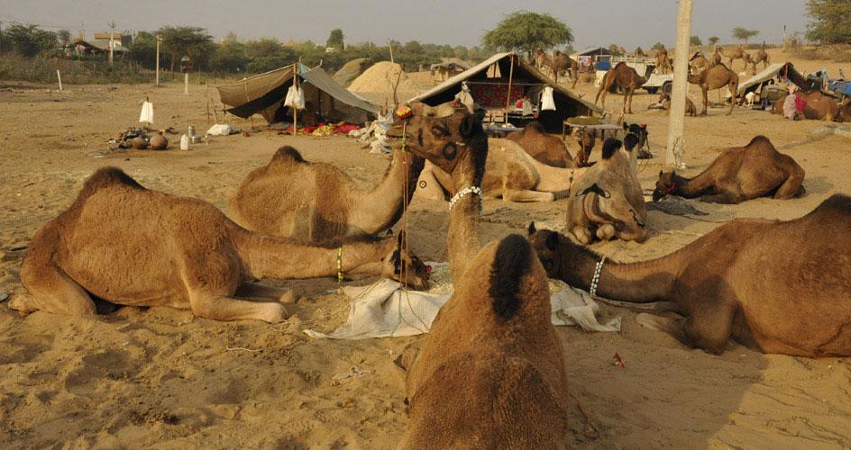 Pushkar Cattle Fair
