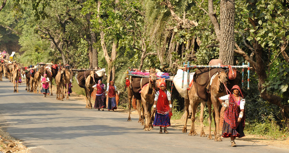 Rabari Carvan Gujarat - A Photo Captured by our Guest during Gujarat Tribal Tour
