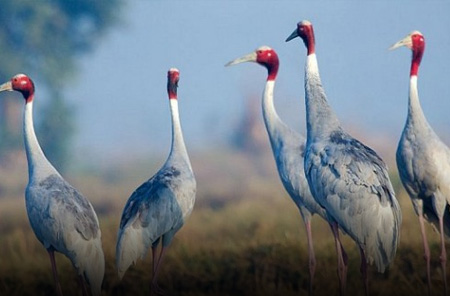 Keoladeo Ghana National Park