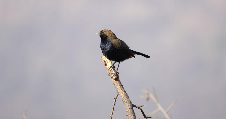 Birdsnear Bijaipur