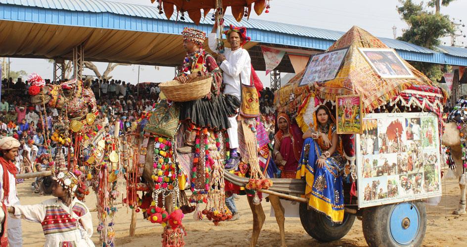 Rajasthancamel