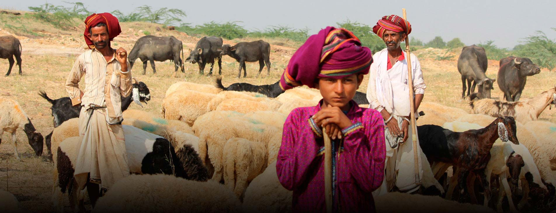 Gujarat Tribal Tours