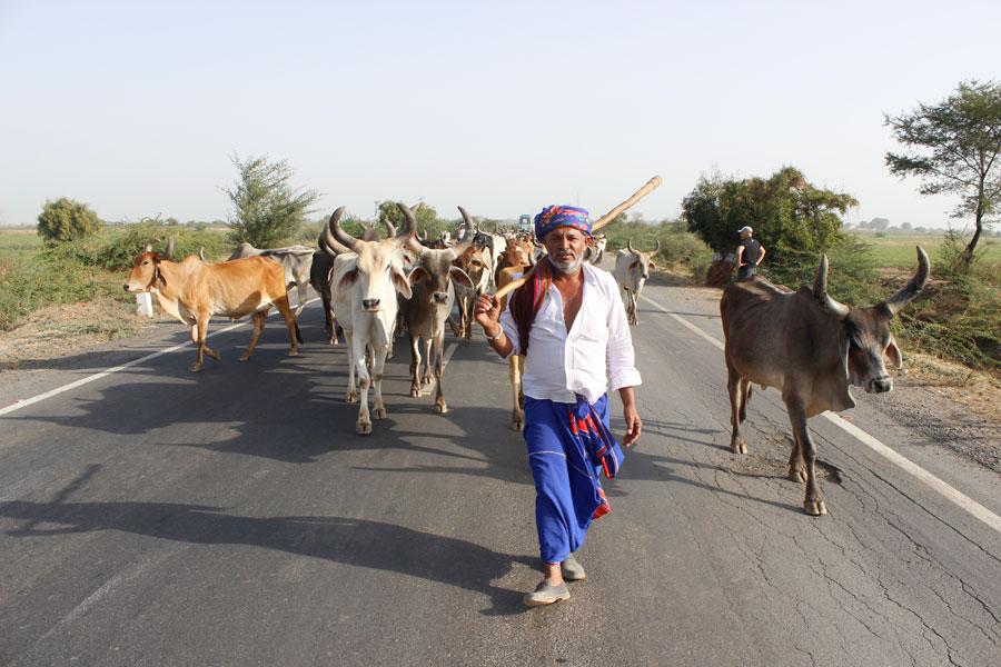 Bharawad Tribe Gujarat