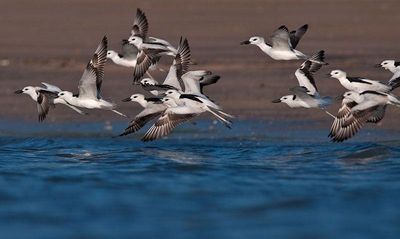 Jamnagar birding- Gujarat Wildlife Tour