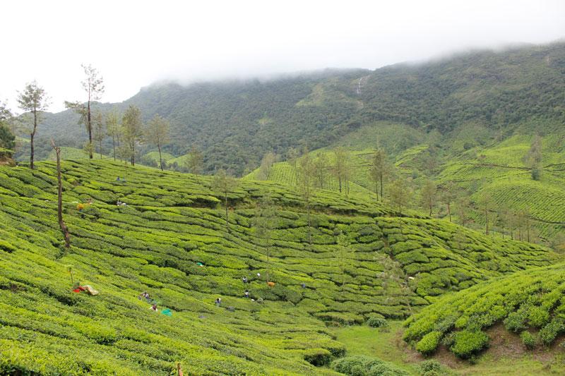 Kerala tour munnar