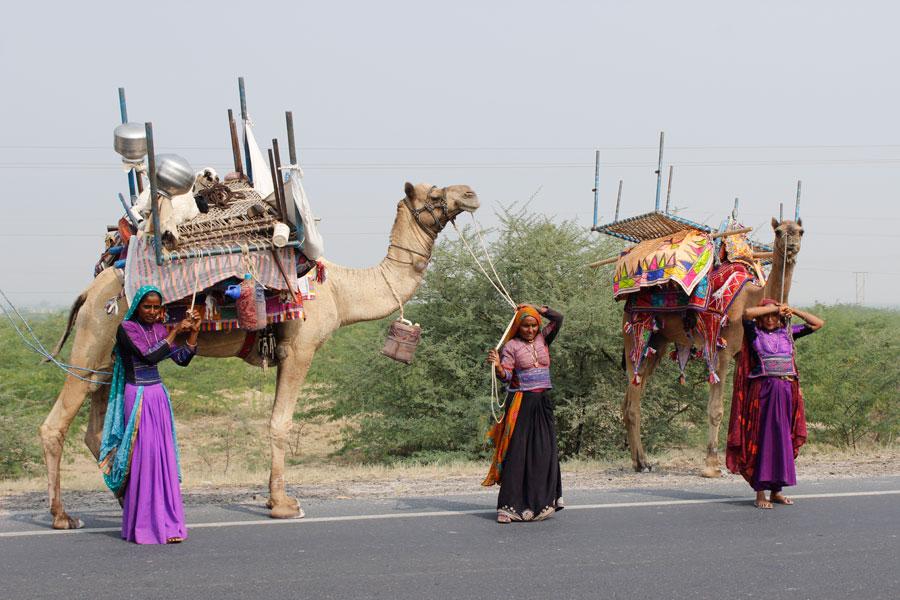 Rabari carvan