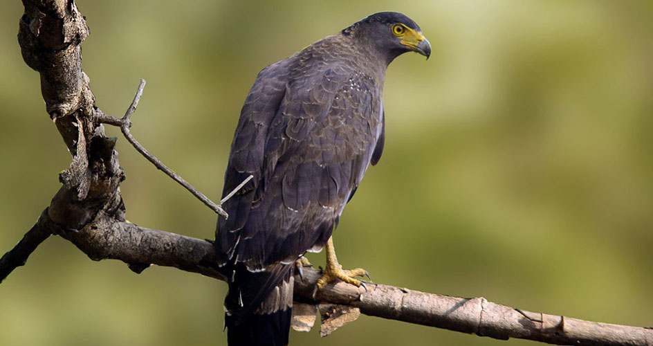 Birds in Gujarat