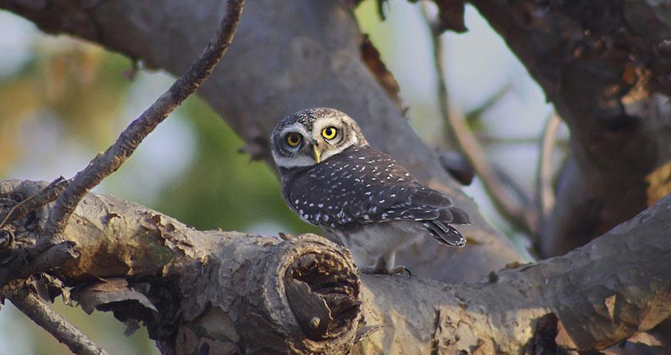 Gujarat Wildlife Birds
