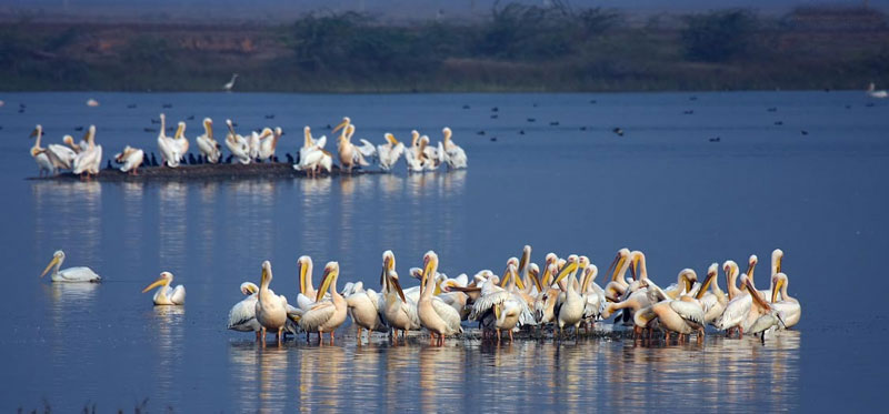 jamnagar- Gujarat Wildlife Tour