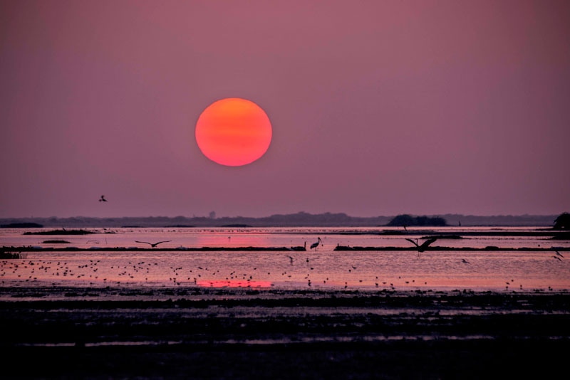 sunrise at little runn of kutch-Gujarat Wildlife Tour