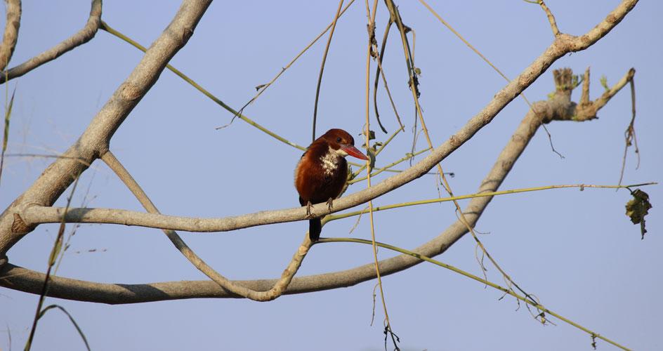 Birdingin Bijaipur in rajasthan tour