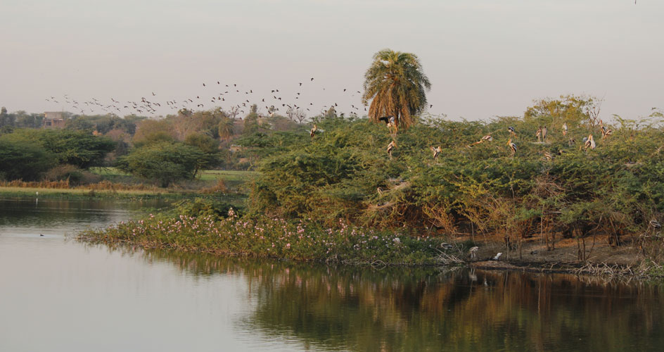 rajasthan tour Birdsinindia