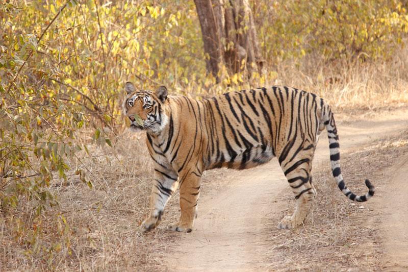 Ranthambhore Safari