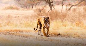 Wild Rajasthan with Taj Mahal Tour