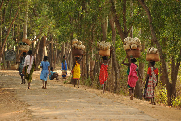 tribal market odisha