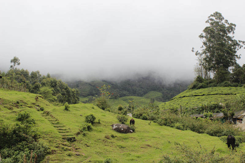 Munnar Tea Gardens in Kerala Onam Tour