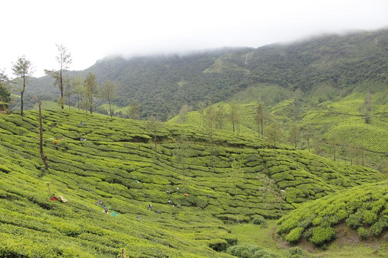 Munnar Kerala Tour 3