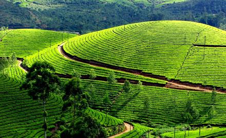 Tea and Spice Plantation