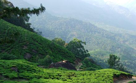 Hill Stations in Kerala Munar